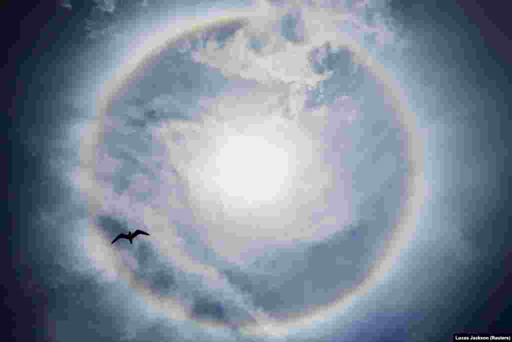 "A bird flies underneath an atmospheric phenomenon known as a parhelion, or ""sun dog,"" in the sky over Seaside Heights, New Jersey, on May 14."