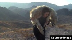 Макгилливри несет мертвого волка в Неваде