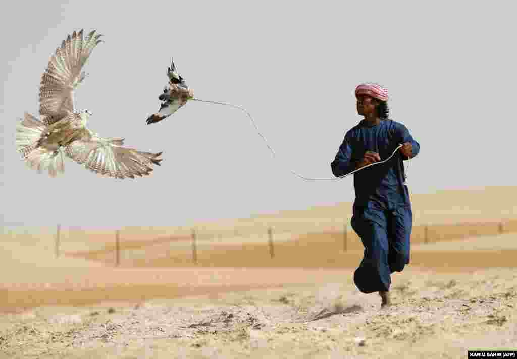 An Emirati falconer moves a lure to attract a falcon in the Liwa Oasis, southwest of Abu Dhabi. (AFP/Karim Sahib)
