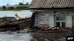 Затопленный поселок близ Комсомольска-на-Амуре