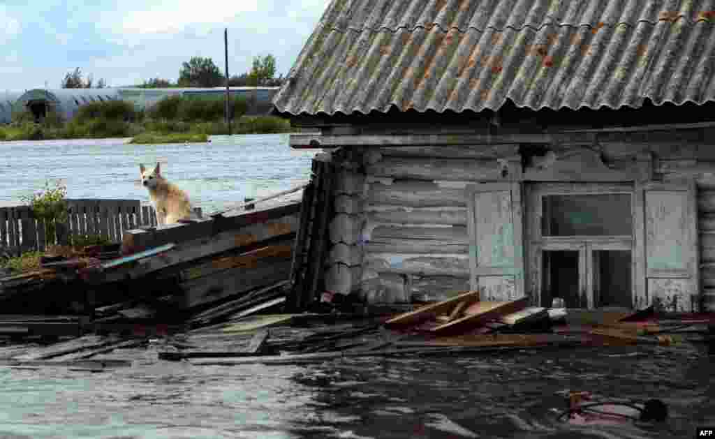 A dog sits next to floodwaters outside a house in the township of Khorpinsky in the Russian Far East city of Komsomolsk-on-Amur. (AFP/Vladimir Kosarev)