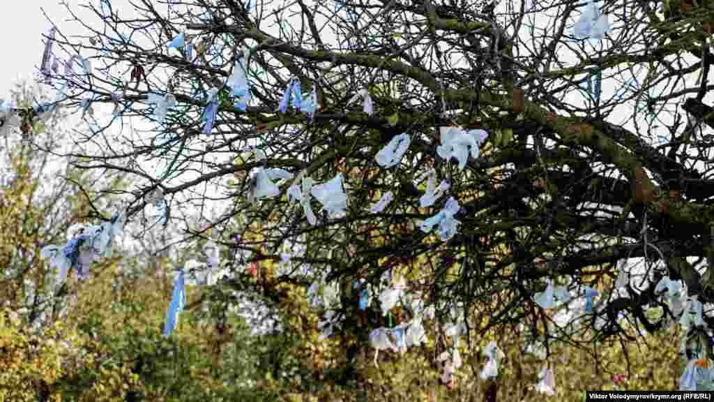 Дерево, куда туристы привязывают ленточки на память