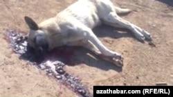 Убитая на улице собака, Ашхабад (архивное фото)