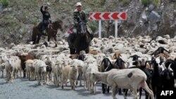 Мал айдап келе жатқан қырғыз жастары. Туу-Ашу, Қырғызстан, 17 маусым 2011 жыл. (Көрнекі сурет)