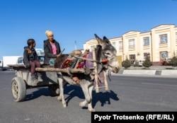 Ишак, запряженный в повозку. Самарканд, Узбекистан, 29 ноября 2019 года.