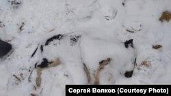 Труп собаки в Красноярске (архивное фото)