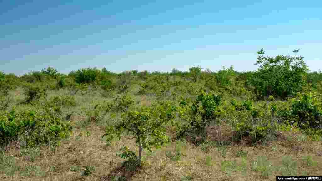 Село на десятки гектарів оточують занедбані виноградники. Колись радгосп «Сонячний», центральна садиба якого розміщувалася в Скворцовому, спеціалізувався на вирощуванні технічних сортів винограду