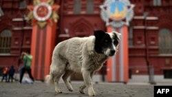 Центр Москвы полностью подготовлен к празднествам 9 мая