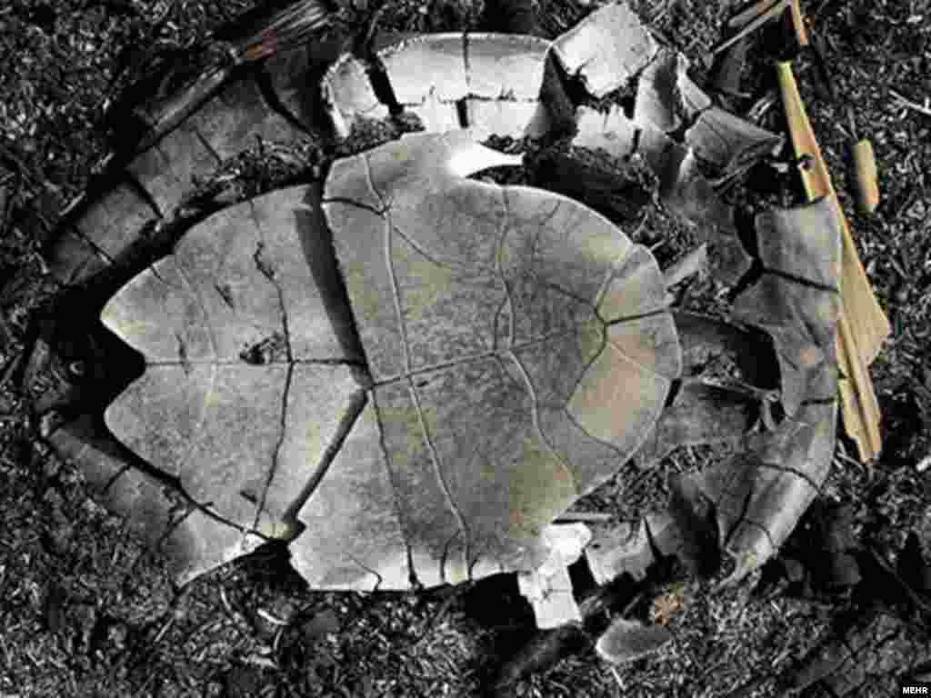 پریشان؛ قتلگاه لاکپشتها و پرندگان سوخته - هزاران لاک پشت و پرنده مهاجر در یکماه گذشته در آتش نیزارهای دریاچه پریشان زنده زنده سوختهاند