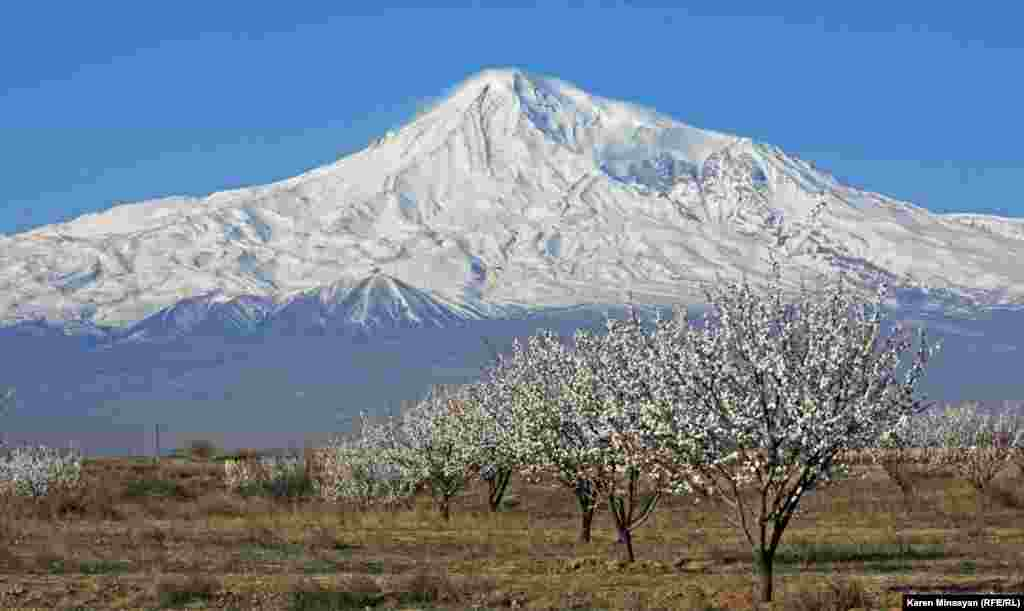 Blossoming trees in the Ararat region of Armenia. (RFE/RL/Karen Minasyan)