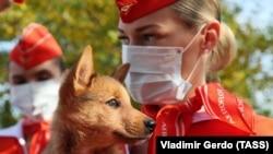 Korábban felismerheti a koronavírus-fertőzést egy kutya, mint egy teszt?