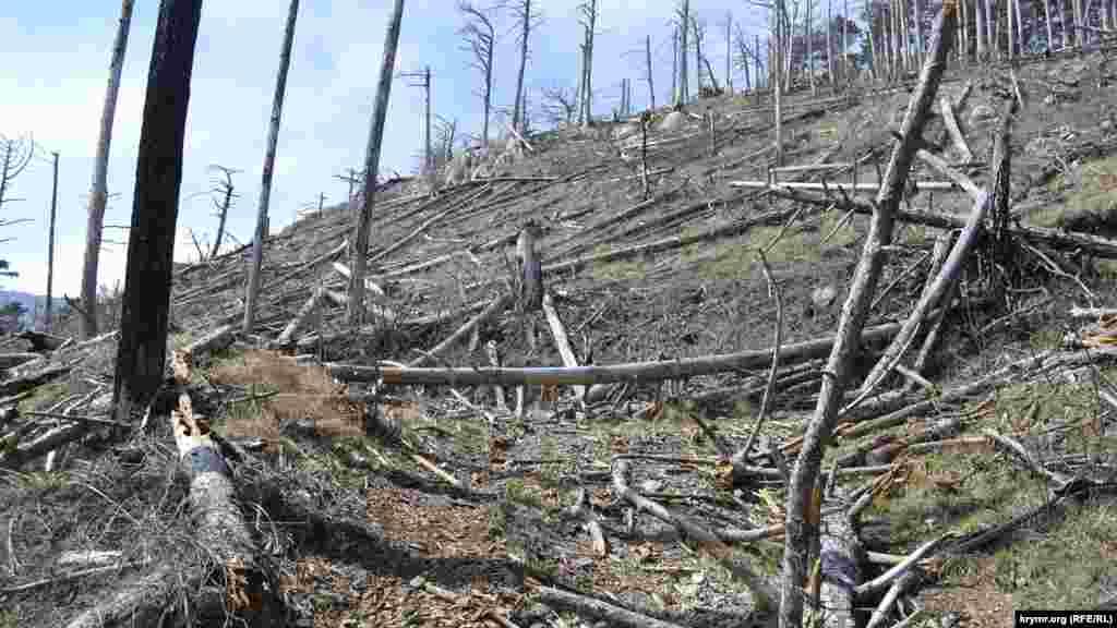 «Пожежна дорога» (використовується для швидкого гасіння лісової пожежі) вся завалена зламаними гілками