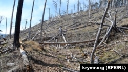 Наслідки лісових пожеж в Ялтинському гірсько-лісовому природному заповіднику, ілюстраційне фото