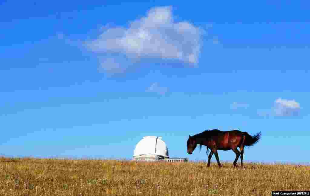 Лошадь недалеко от купола обсерватории