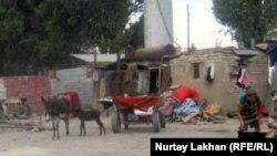 Пункт сдачи ишаков в аренду в поселке Абай Алматинской области. 9 июля 2012 года.