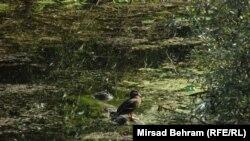 Hutovo blato, foto: Mirsad Behram