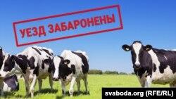 Belarus -- Animals at the border -- 17mar2019