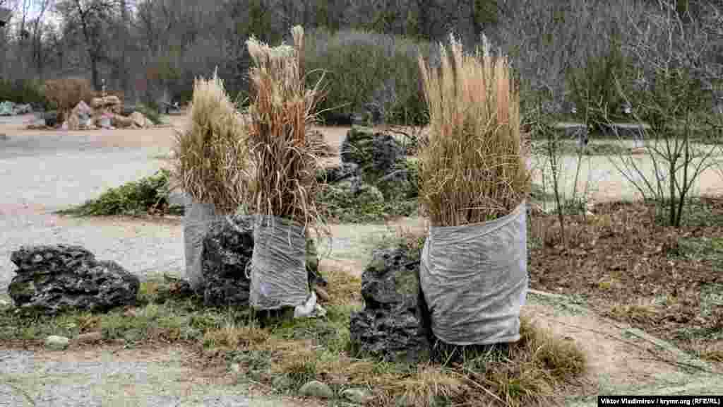 Квіти й чагарники обмотують матерією, щоб захистити їх від холодів та опадів