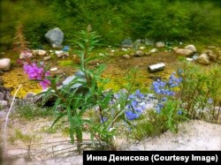 Цветы севера