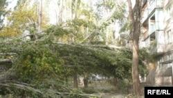 Жел екпініне ағаштар да шыдай алмады. Тараз, 11 қазан, 2008 жыл