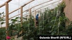 سبزخانه ساخته شده توسط وزارت زراعت و مالداری در ولایت بامیان