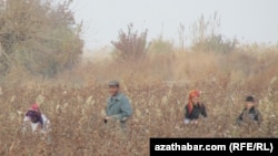 Türkmenistanyň pagta meýdany