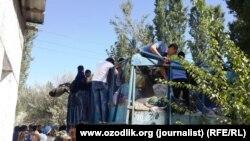 Өзбекстандагы пахта терүү ишинен бир көрүнүш