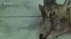 Կենդանաբանական այգու աշխատակիցները չեն կարծում, որ տնօրենը շների ոհմակի պատճառով պետք է հեռանա