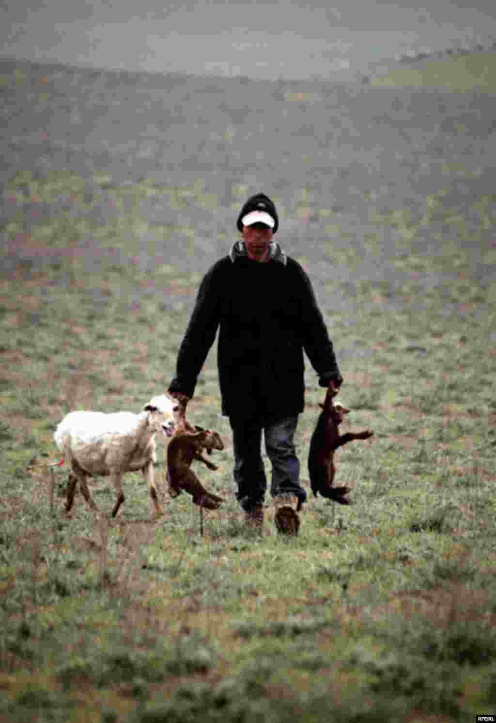 A Spring Passage Through The Caucasus #18