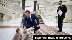 Дмитрий Медведев гладит щенка в Ашхабаде, 31 мая 2019 год
