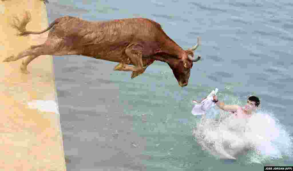 A bull jumps in the water during the traditional Bous a la mar (Bulls to the sea) festival at Denia's harbor near Alicante, Spain. (AFP/Jose Jordan)