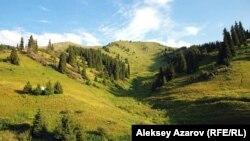 Кокжайляу в летний период. Алматы, 20 июля 2012 года.