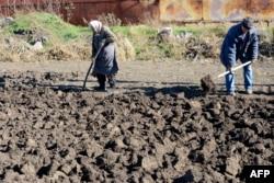 Люди похилого віку копають картоплю після нічного артобстрілу в селі Повлопіль, Донецька область, 28 жовтня 2014 року