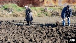 Літні мешканці копають картоплю після обстрілу в селі Павлопіллі, що на Донеччині. Жовтень 2014 року