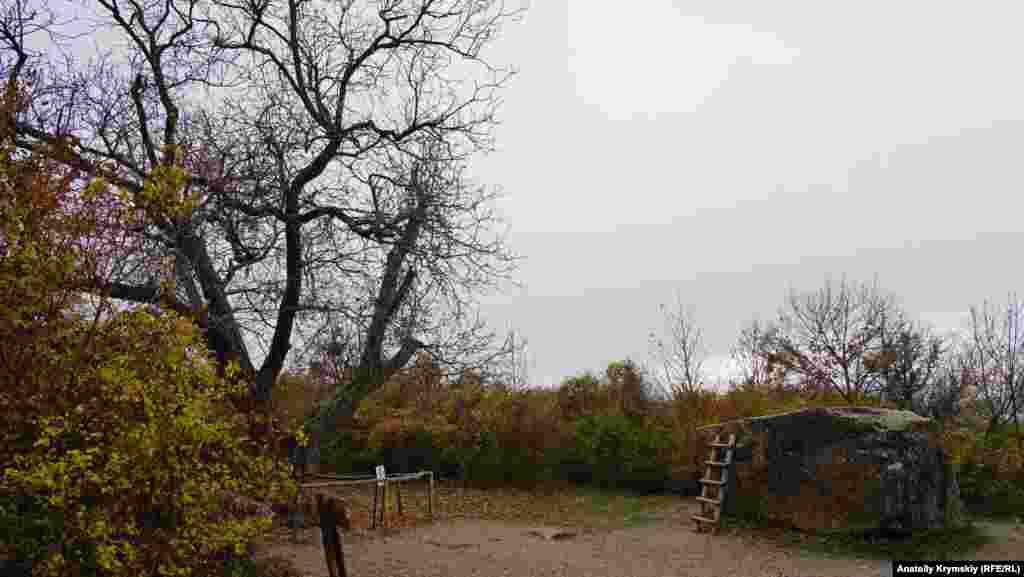 Рядом с этой поляной Нина пела Шурику «Песенку про медведей», а персонаж Юрия Никулина бросал в него с дерева грецкие орехи. «Никулинскому ореху», как он фигурирует в некоторых туристических путеводителях, 177 лет, что зафиксировано на его охранной табличке