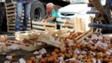 """На """"Дыйкан"""" стекается сельхозпродукция со всех областей Кыргызстана. Поставщикам не всегда удается сохранить товарный вид фруктов."""
