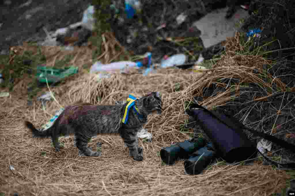A cat wearing a ribbon with the colors of the Ukrainian national flag stands near military binoculars at a checkpoint in the town of Avdeevka  near Donetsk last August.