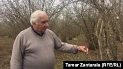 Пострадавшие от мраморного клопа ореховые плантации в западной Грузии