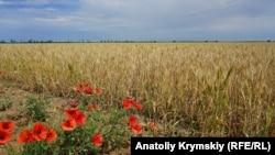 «Засушливая» Правда: степное крымское село в чрезвычайном положении (фоторепортаж)