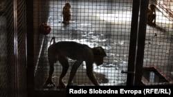 Мајмуни во Зоолошката градина во Битола