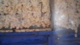 Фермернинг қабул пунктидан қайтариб олиб келган пахтаси