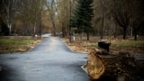 Визитную карточку спилили: каким стал Гагаринский парк в Симферополе (видео)
