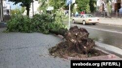 Külək ağacları aşırıb. Foto arxiv