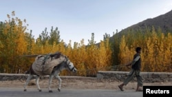 Afghan militants have used donkeys to deliver bombs in the past. (file photo)
