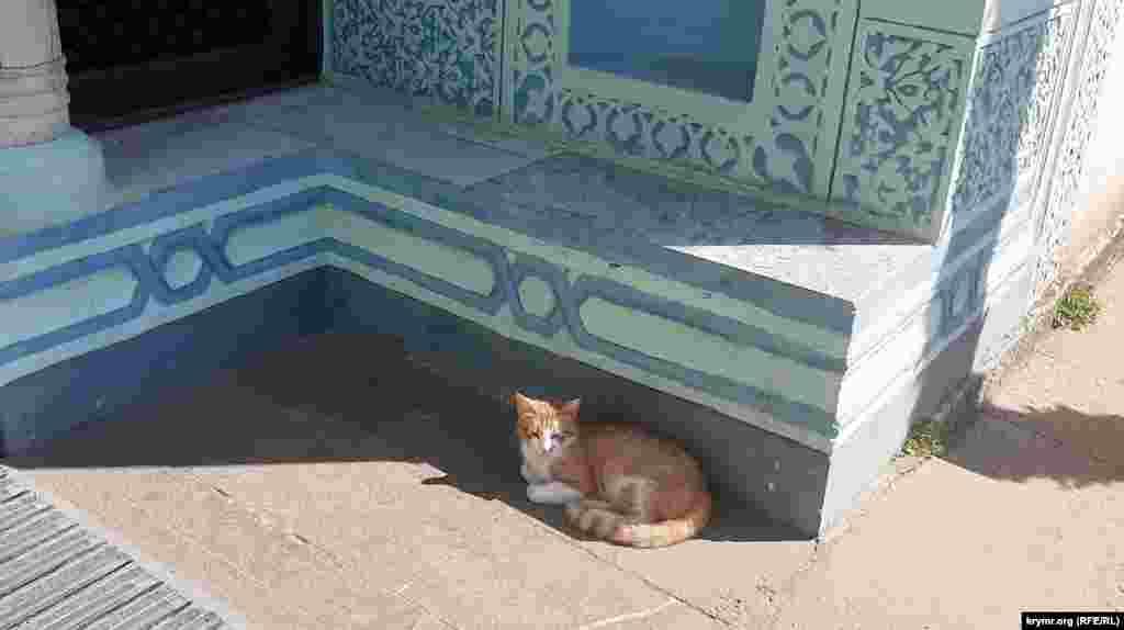 Кошка дремлет в тени у входа в здание