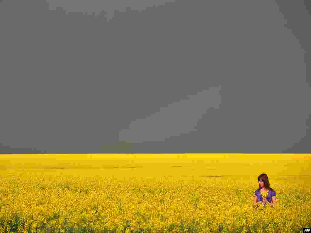 A girl gathers rapeseed flowers in a field in Ukraine as a thunderstorm approaches. - Photo by Sergei Supinsky for AFP
