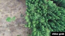 Sječa šume, ilustracija