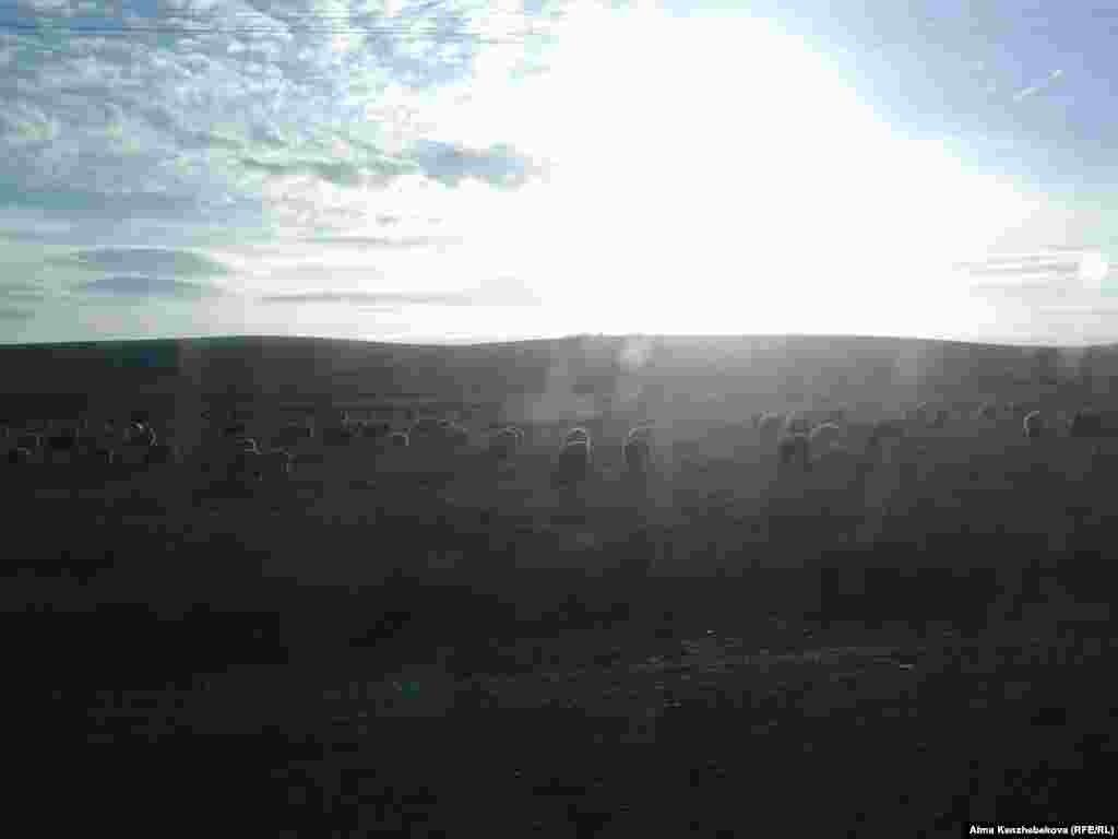 Жол шетінде жайылып жүрген мал көлік астына түсіп қалатын оқиғалар да жиі болып тұрады.