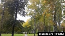 Бярозавая алея ў парку