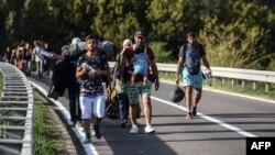 Мигранты на сербско-хорватской границе вблизи населенного пункта Бездан, 17 сентября 2015 года
